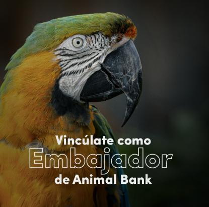 Embajador Animal Bank